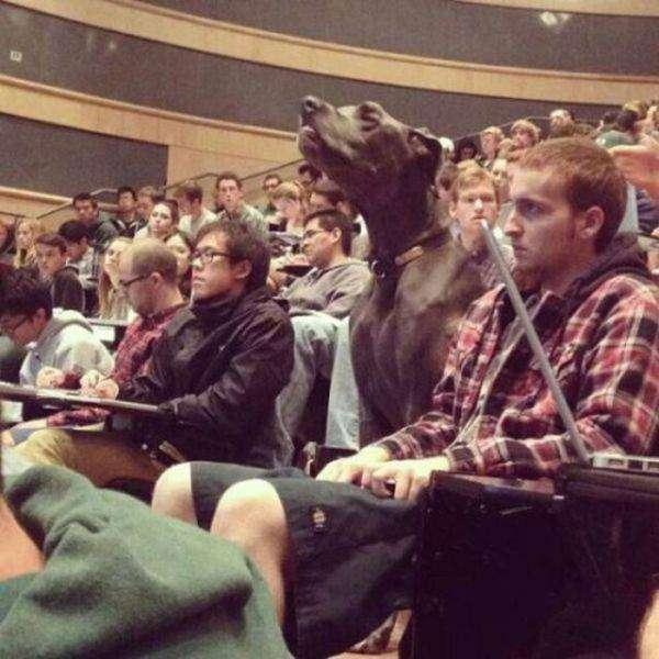 Американські студенти (35 фото)