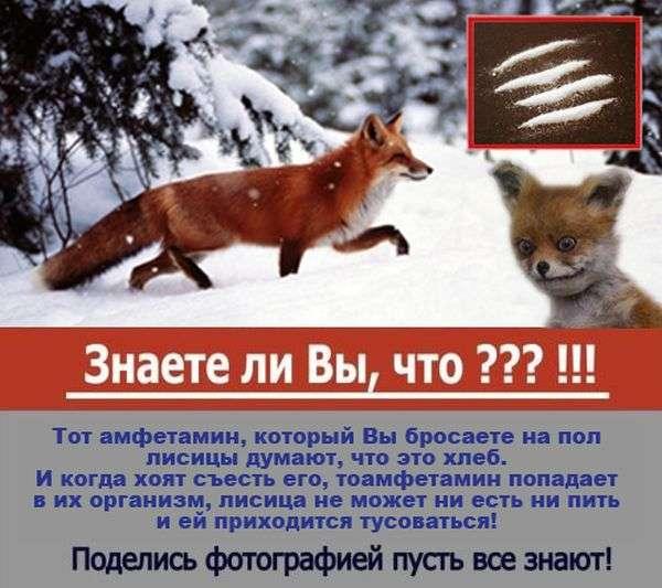 добірка приколів з лисицею (40 фото)