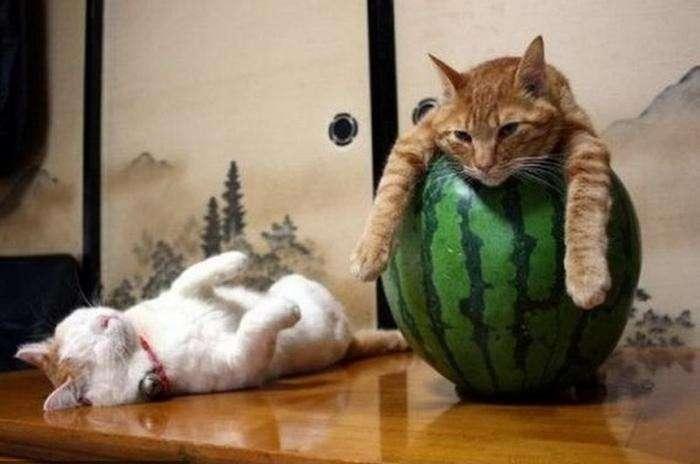 Сплячі котики (20 фото)