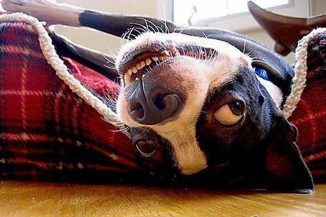 Пост of Собакен! (52 фото)