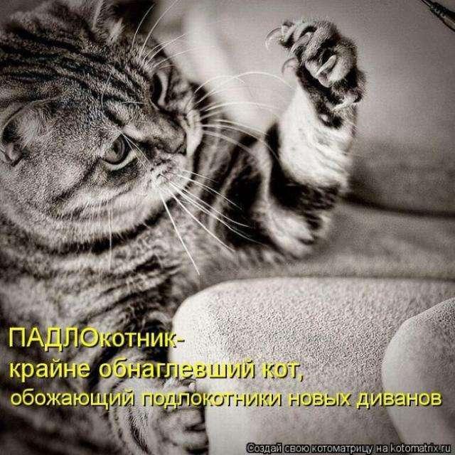 котоматриці (50 фото)