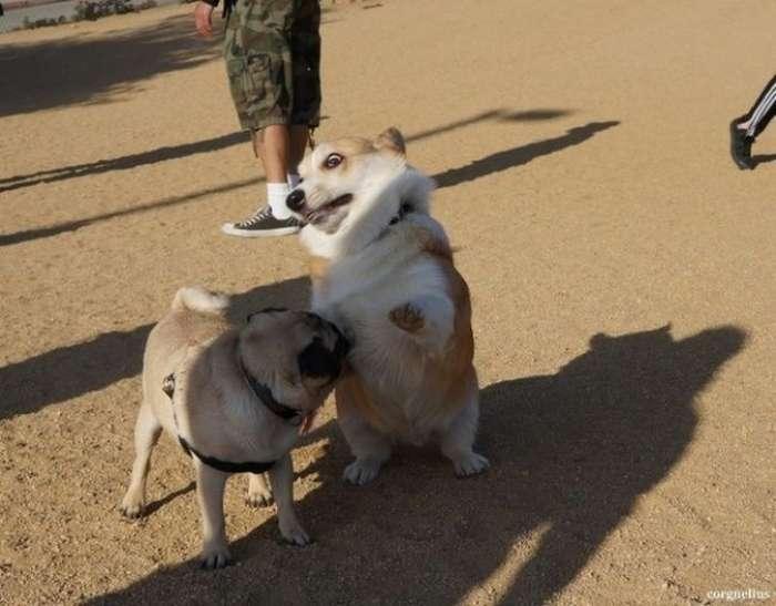 собаки в шоці (25 фото)